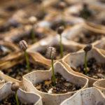 Inzicht - reduceren - verduurzamen - compenseren in 4 stappen naar CO2-neutraal ondernemen