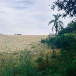 Groenbalans Natuur- en landschapsherstel CO2-opslag en reductie project Brazilie