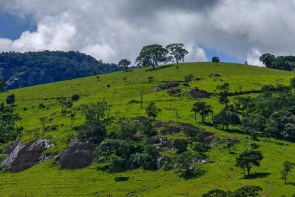 Landrestoratie en herbebossing in Brazilie