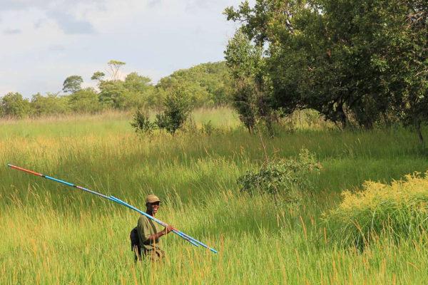 Bescherming tropisch regenwoud in Brazilië