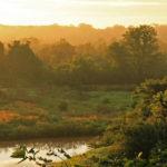 Groenbalans CO2-compensatie project