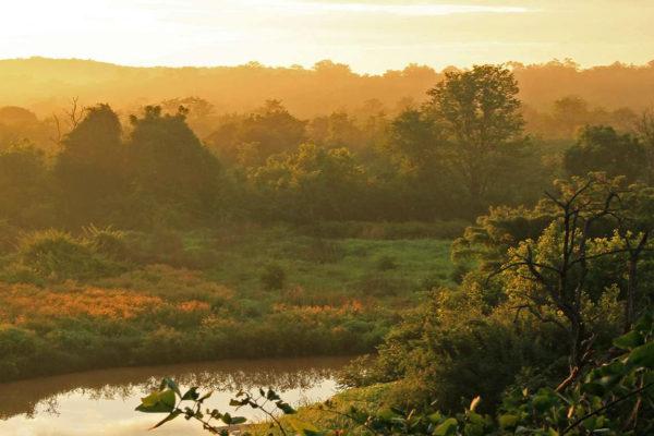 Bosbehoud en biodiversiteit in Zimbabwe