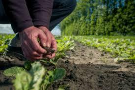 Groenbalans carbon farming en CO2-compensatie van Nederlandse bodem