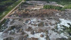 Regenwoud en ontbossing, 4 nieuwe CO2-compensatieprojecten Groenbalans