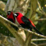 Groenbalans bescherming tropisch regenwoud met inheemse flora en fauna in Brazilie - CO2-compensatieproject